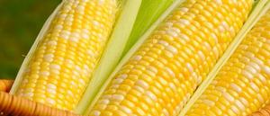 玉米0.8 1个