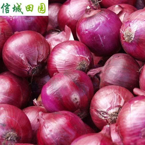 洋葱 1公斤